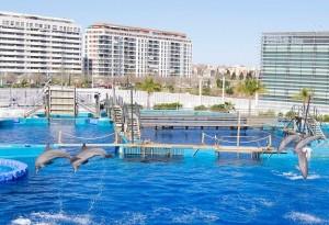 Visita el delfinario de Valencia con descuentos en Ave