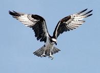 Viaja en Ave a Málaga y disfruta de estas aves rapaces