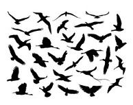 Turismo ornitológico en Málaga