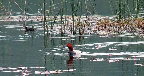 Disfruta de la Laguna de Talayuelas viajando en AVE a Cuenca