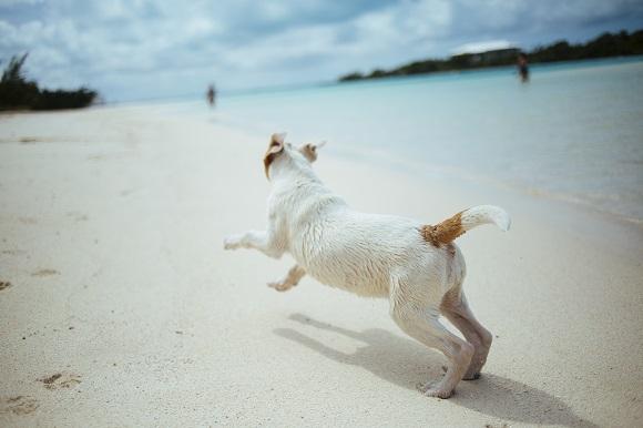 Si quieres viajar con tu perro, viaja en AVE a Alicante